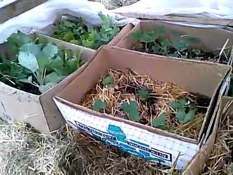 I Love Gardening in Cardboard!