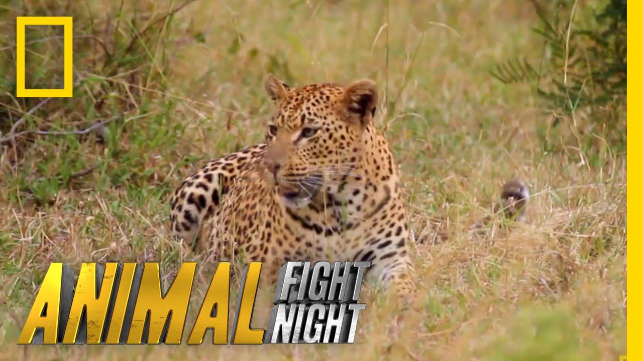 Watch Animal Fight Night Online | Verizon Fios TV