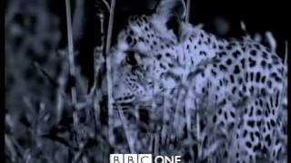 The Wildlife Specials Trailer - BBC One 1997