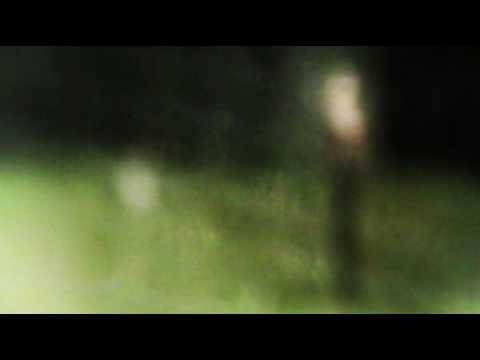 animal collective  - a manatee dance