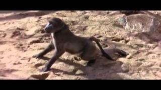 Пьяные и смешные животные после плодов марупы