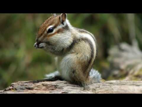 Nuisance Wildlife | Westerville, OH - The Wildlife Control Company Inc