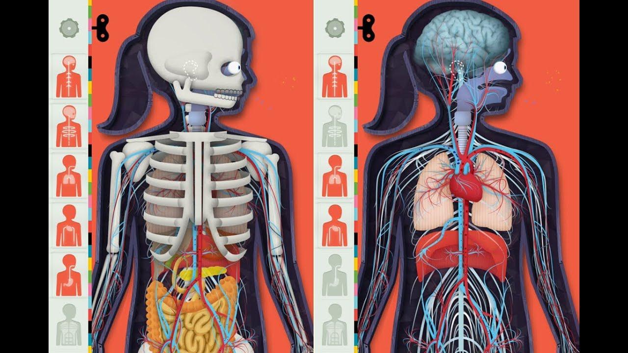 Der menschliche Körper App | Beste Kinder Apps - YouTube