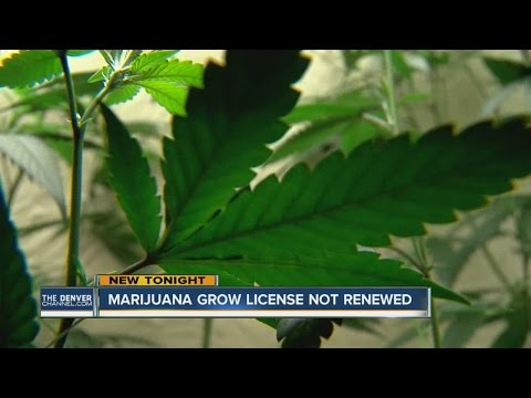 Marijuana Grow License Not Renewed