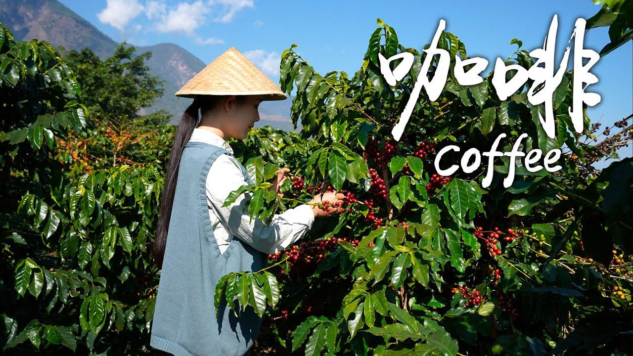 冬日午后,来杯暖暖的云南咖啡吧!【滇西小哥】