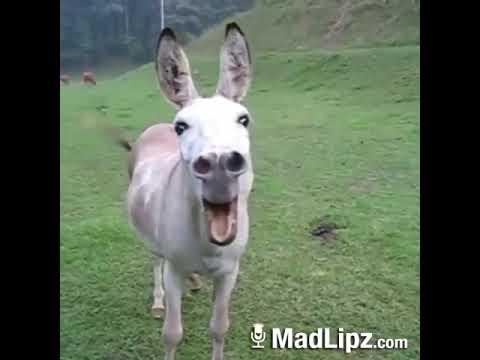 Aadhar card status in donkey madi lipz......
