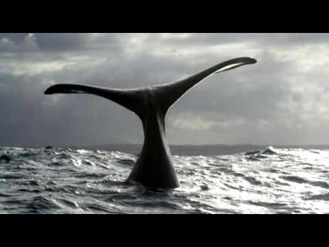 Пение китов (видео мое не красть)