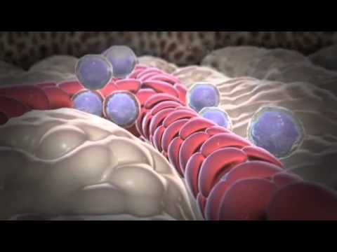 How White Blood Cells Are Formed   YouTube
