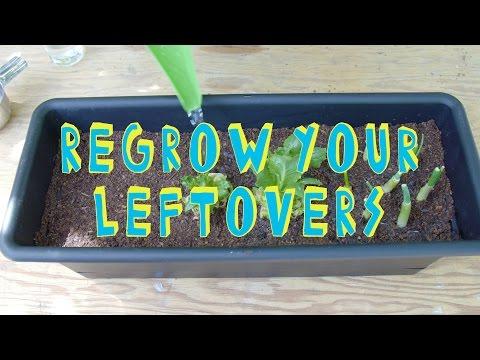 How to Regrow Your Leftovers! (Smart Life Hacks)