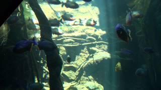 Mallorca Impressionen - Palma Aquarium