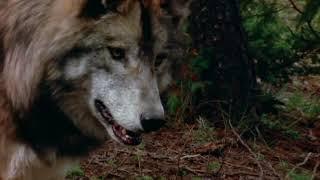 Документальный фильм о собаках