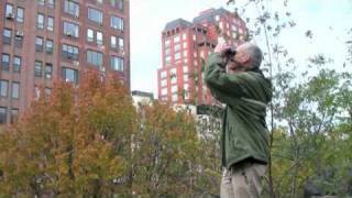 Learning to Identify 172 species of Trees in Central Park