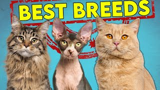 These Are The Best (and Worst) Cat Breeds For First Time Owners  Updated!