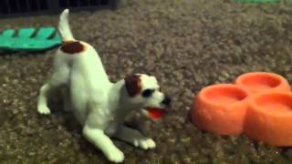 Good Dog, Bad Dog, WILD Dog (Ep. 13)