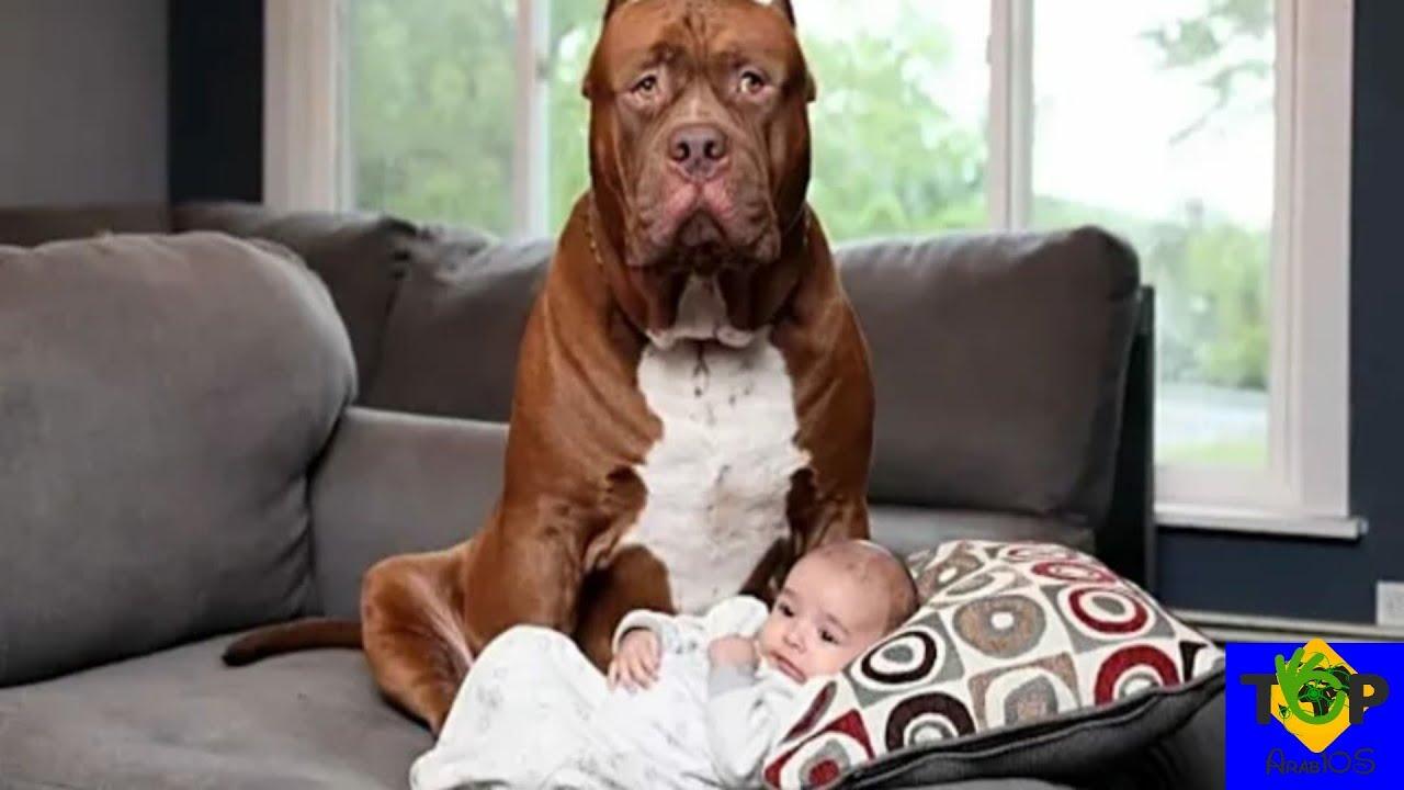 تركوا الرضيع وحيدًا مع هذا الكلب، فأنظر ماذا فعل!