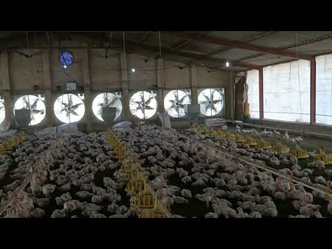 Automatic Poultry Broiler Farm ( Complete Poultry Farming Solutions By Sonu Sangwan)