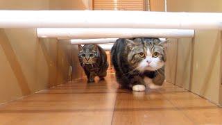 トイレットペーパーの芯ロードとねこ。Toilet paper core road and Maru&Hana 3.