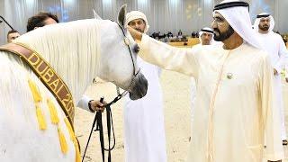 محمد بن راشد يشهد ختام بطولة دبي الدولية للجواد العربي