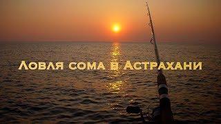 Ловля сома в Астрахани
