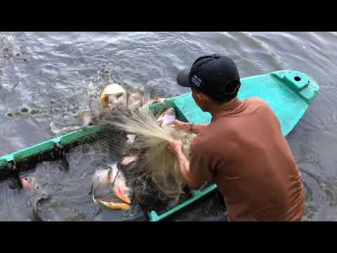 Top 3 Cast Net Fishing For Piranha Fish