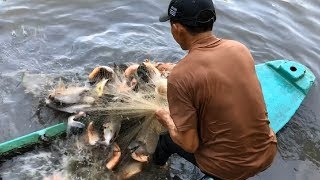 Top 3 Most Dangerous Cast Net Fishing Piranha Fish