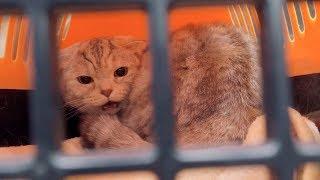 고양이-라온이-또-병원에-갔다왔어요
