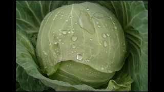 Organic Gardening - Tips and Tricks for Organic Gardening; Organic Farming Methods