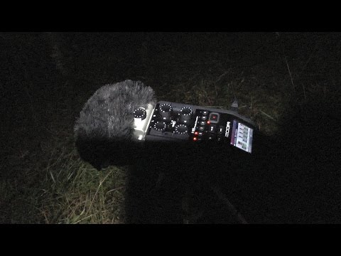 Strange sounds and pictures recorded at Harwood Forest in Northumberland