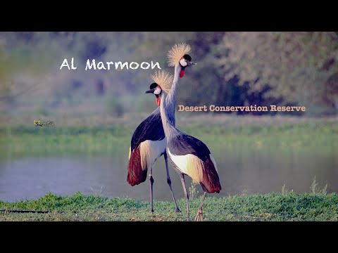 Al Marmoom Desert Conservation    4K