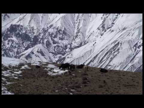 The Last Yak Herder of Dhe- Part 1