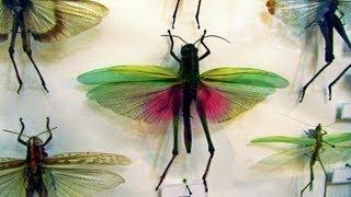 """Выставка """"Неизвестная планета насекомых"""""""
