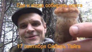 Поход в лес за грибами опятами березовая кап 17 сентября 2017 выживание в дождь Сибирь тайга охота п
