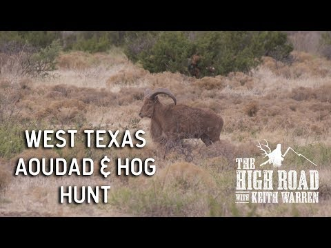 West Texas Aoudad & Hog Hunt   The High Road with Keith Warren