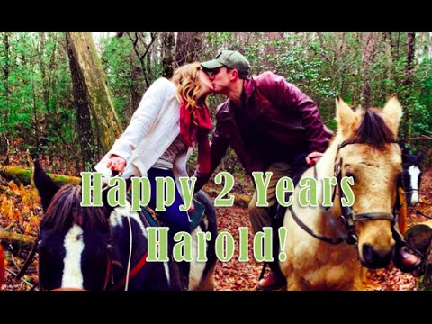Happy 2 Years Harold! | Rachel Wynn