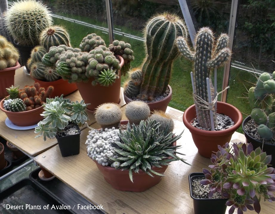 how to re pot an established cactus and succulent bowl garden youtube. Black Bedroom Furniture Sets. Home Design Ideas