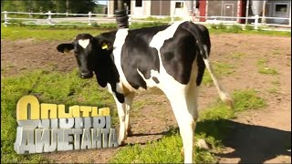Сыровары. Как производят сыр | Опыты дилетанта