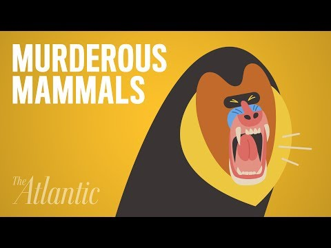 Which Animal Murders the Most?