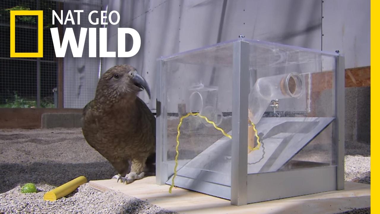 Thats One Smart Bird | Animal All-Stars