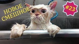 Приколы про животных Смешное видео про котов собак и не только Выпуск 23