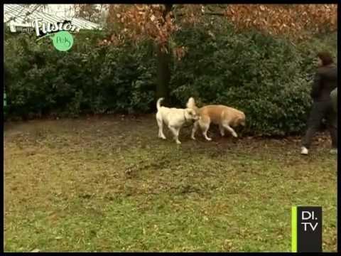 Di.Fusion Pets – Interazione tra cani