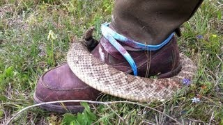 Doomsday prepper's, survivalist guide to cleaning rattlesnake