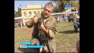 Первая в крае выставка охотничьих собак