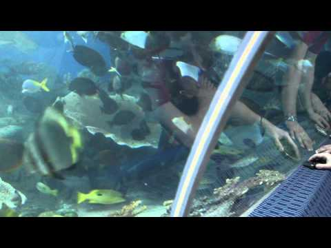Pattaya Attractions – Underwater World