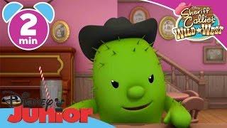 Sheriff Callie | Kit Cactus | Disney Junior UK