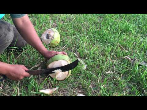 how-to-open-young-coconut-by-chef-husen