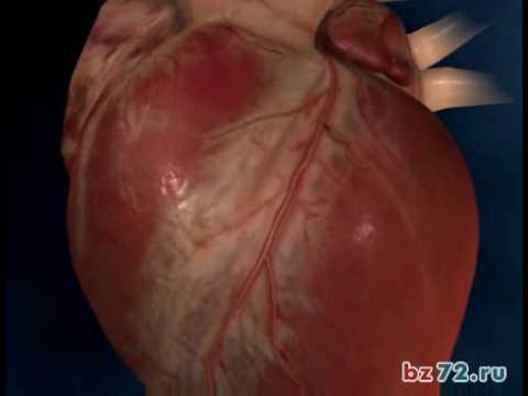 Сердечная недостаточность - Причины, симптомы и лечение. МЖ.