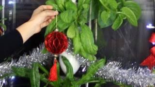 Food-Growing Christmas Tree