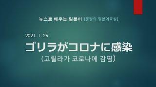 [뉴스로 배우는 일본어] 고릴라가 코로나에 감염, ゴリ…