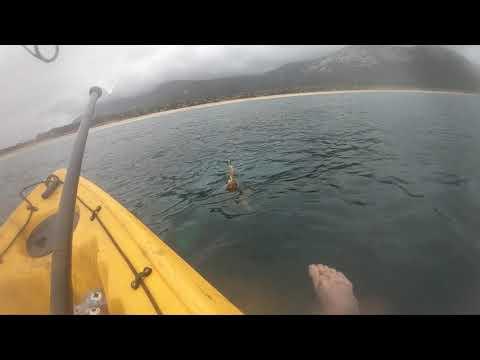 Epic Footage Of Tasmanian Squid Fishing!