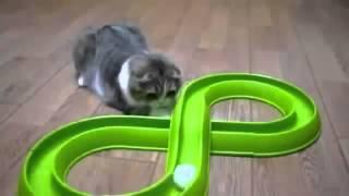 Видео про котиков
